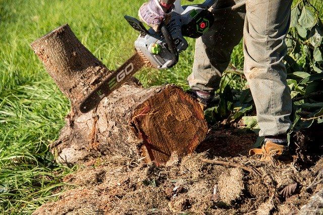 entreprise de déssouchage d'arbre