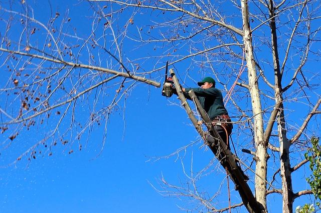 elaguer un arbre en hauteur